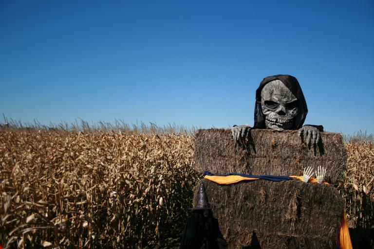 skeleton-halloween-spooky-skull-192305
