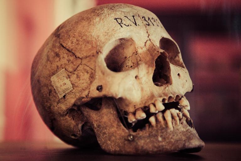skull-old-human-skull-vintage-1692998